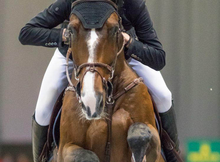 Photographe de sports Kevin Staut France, Concours international Genève 2018